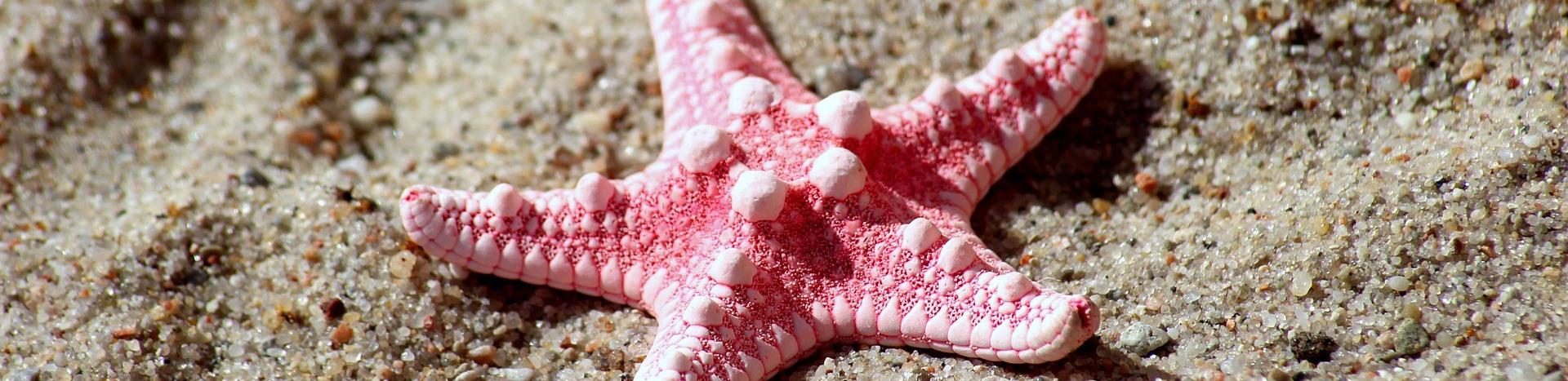 BandeauEtoilestarfish 4335085 1920